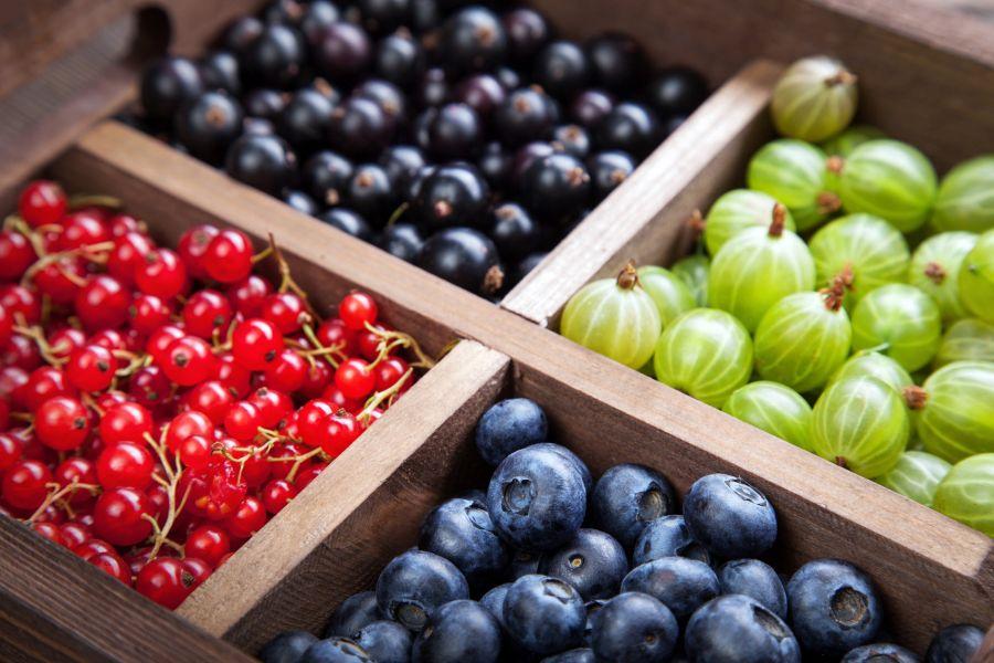 shutterstock bobulove ovocie